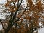 2009_23_niedziela_jesien